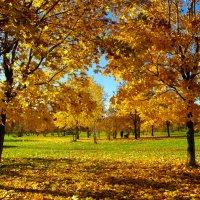Золото листьев. :: Александр Атаулин