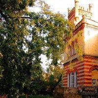 Замок под деревом :: Людмила