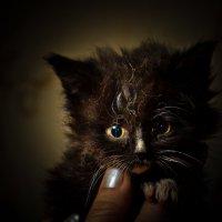 Чёрный котенок на руке :: Дмитрий Кузнецов