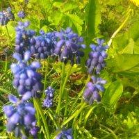 Цветы :: Наталья12 Ромашкова