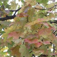 Осень и на юге осень. :: Вячеслав Медведев