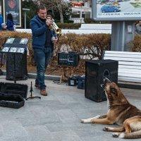 Музыкант играет, собака подвывает :: Юрий Яловенко