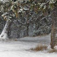 Снегопад в лесу :: Исаков Александр
