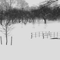 Зимний парк :: Таня Летто