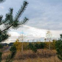 Осень. :: Владимир M