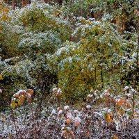 Снег неожиданный и дерзкий... :: Лесо-Вед (Баранов)