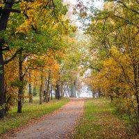Осень в пасмурный день 10 :: Виталий