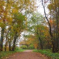 Осень в пасмурный день 7 :: Виталий