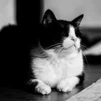 Пряник. Целеустремленный кот. :: Val Савин