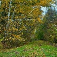 Прогулка в осень. :: владимир