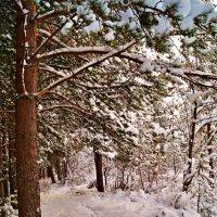 зимний лесок :: Валерия Воронова