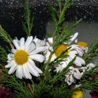 дождливый день :: Роза Бара