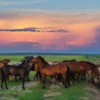 Закат и лошадки. :: Sven Rok