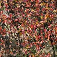 Осенняя гамма цветов полна теплоты и яркости... :: Аnatoly Polyakov