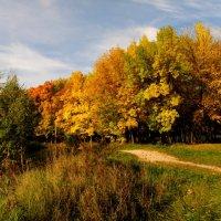 Яркие осенние палитры :: Андрей Головкин