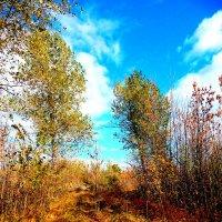 краски осени :: Даша Щиголь
