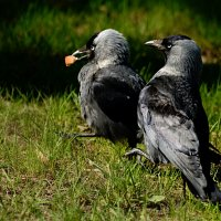 малыш и мама :: linnud