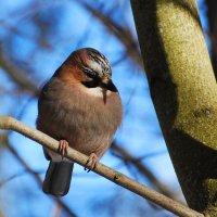 красавица :: linnud