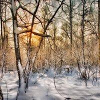 Зимний лес . :: Va-Dim ...