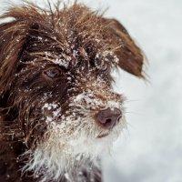 соскучилась по снегу :: Tatyana Belova