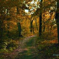 Осень :: Роман Кривеженко