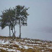 Одиночество,осень......... :: Paparazzi