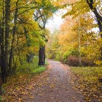 Осень в пасмурный день 13 :: Виталий