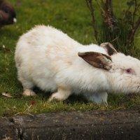 Кролики :: Nyusha