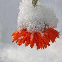 Первый снег :: Краснов  Ю Ф
