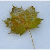 Снежный ноябрь.... :: Светлана