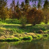 Природа. Ташкент :: ОЛЬГА