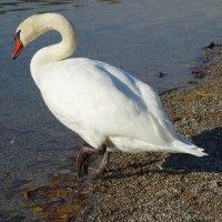 ...благородные птицы! :: Galina Dzubina