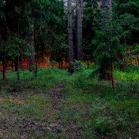 Вечером в лесу :: Владимир Безбородов