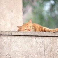 Ну , отдыхаем  мы  так  в  Китае ! :: Виталий Селиванов