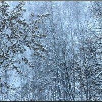 Погода... :: Сергей Гончаров