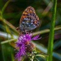 Бабочка :: Андрей Дворников