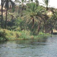 река Нил Египет :: kuta75 оля оля