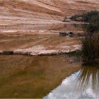 В каньоне Эйн Авдат. Израиль :: Lmark