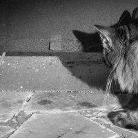 Охотник (...мышку спасли...) :: Вячеслав Крапивин