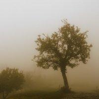 smog :: Vazgen Martirosyan