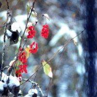 морозное утро :: Olesia Dildina