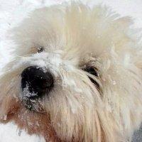 А я люблю снежок ! :: Мила Бовкун