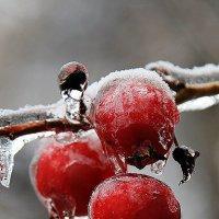 Ледяные яблочки :: Анастасия Осипова
