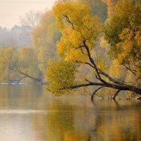 Осенняя акварель :: Ирина Зубарева