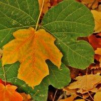 Осенние листья :: Светлана