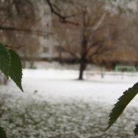 Снег и зелень... :: марина ковшова