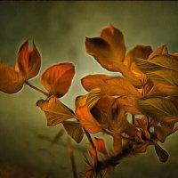 Осенний блюз.... :: Tatiana Markova