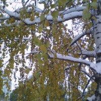 Береза под снегом :: марина ковшова