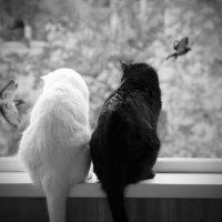 """""""Каку птичку? - Каку, каку - Самую жирную!"""" :: Владимир Шехтер"""