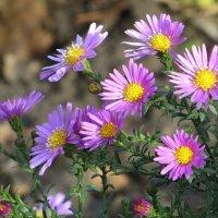 Цветы из далёкого детства :: Татьяна Смоляниченко